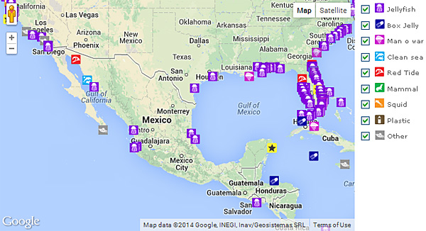 Puerto Vallarta World Map.Are Jellyfish Going To Take Over The World Scientists Have An App