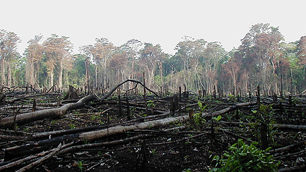 Lacandon Jungle Deforestation Lacandon Jungle Burned For